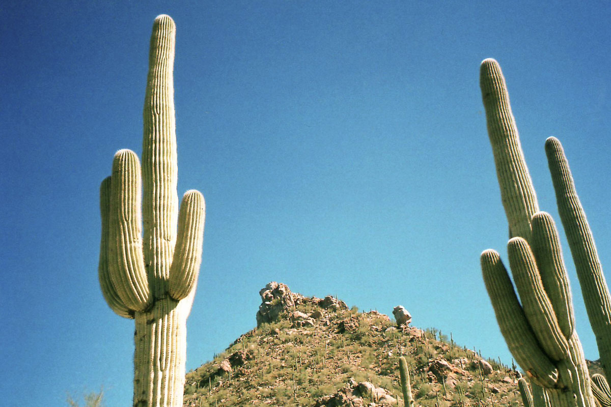 Photo of cactus.