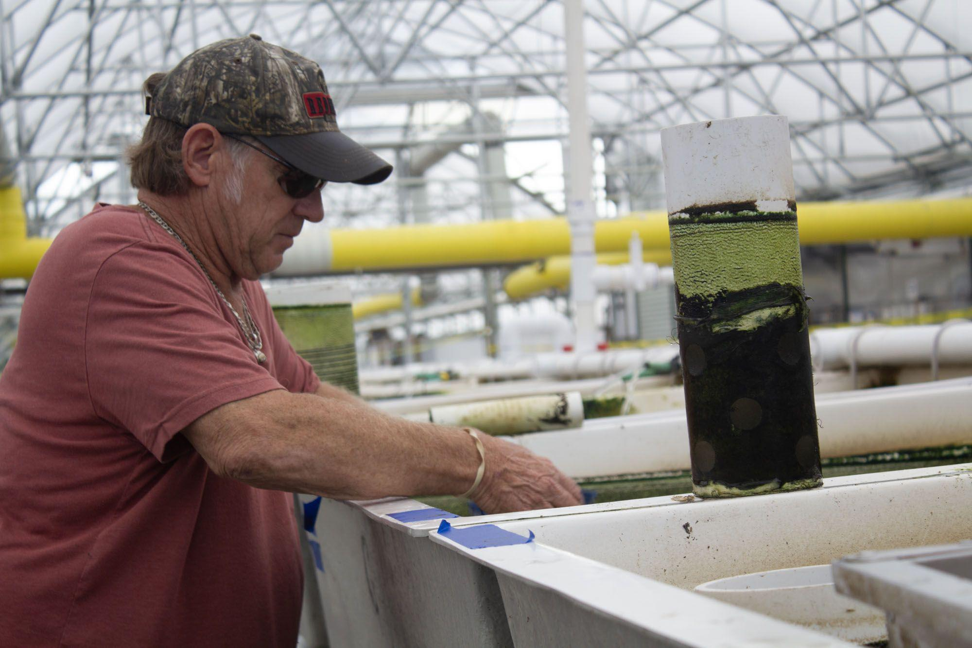 Dave Block standing at at tank, in an aquaculture facility, with hands in the tank.