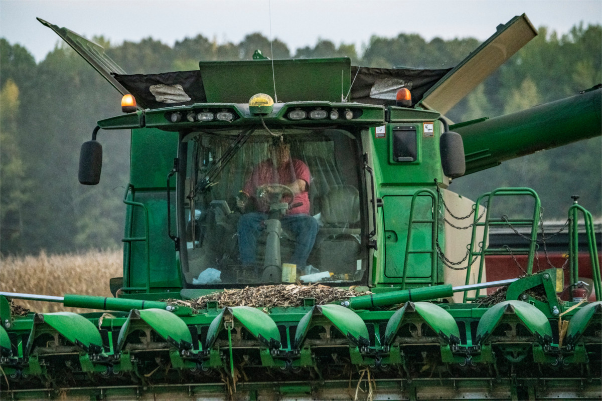 A man driving a green corn harvesting machine, heading straight for the camera.