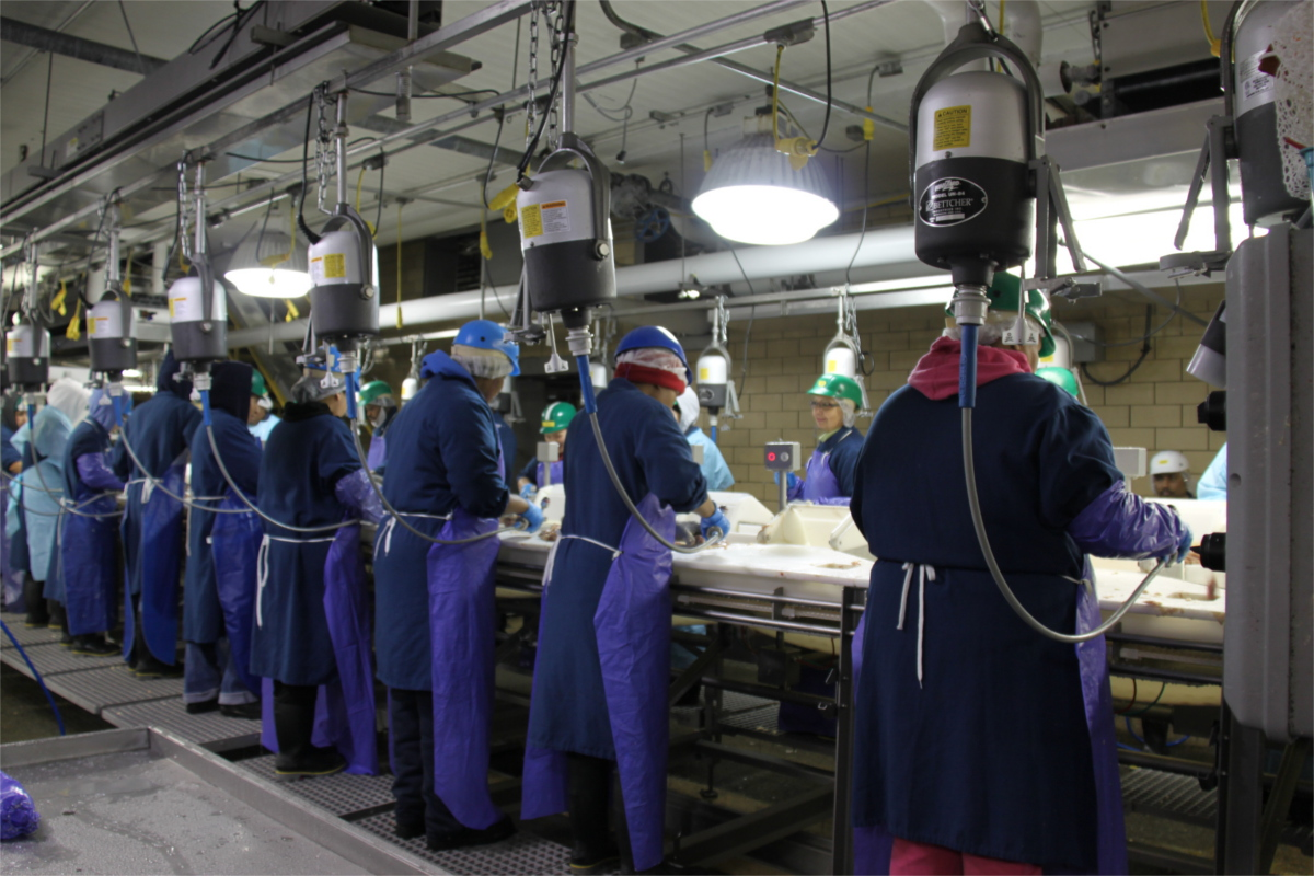 Workers in blue uniforms and protective gear at an assembly line at a chicken processing plant.