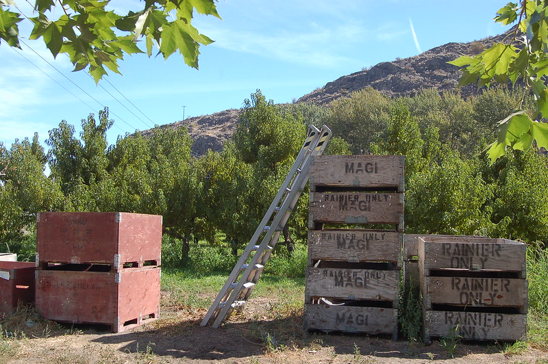 Large wooden cherry crates stacked in a landscape with mountains and blue sky