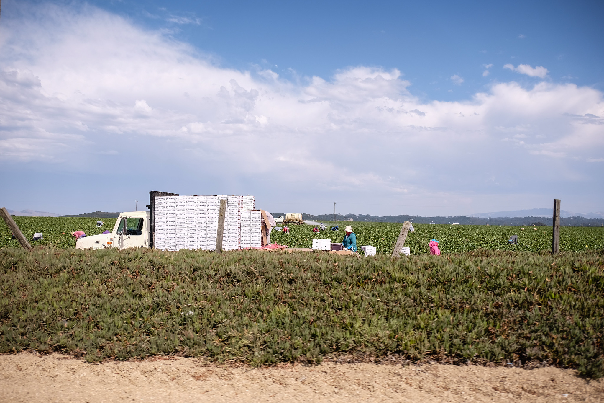 A white truck with white produce boxes stacked on the back parked in a field with workers bent over, low mountains and blue sky in the background.