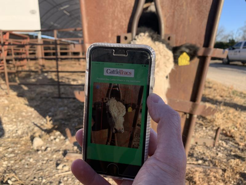 A hand holding a phone in front of the face of a cow in a pen, on the phone screen it says CattleTracs and the face of the cow in a frame.
