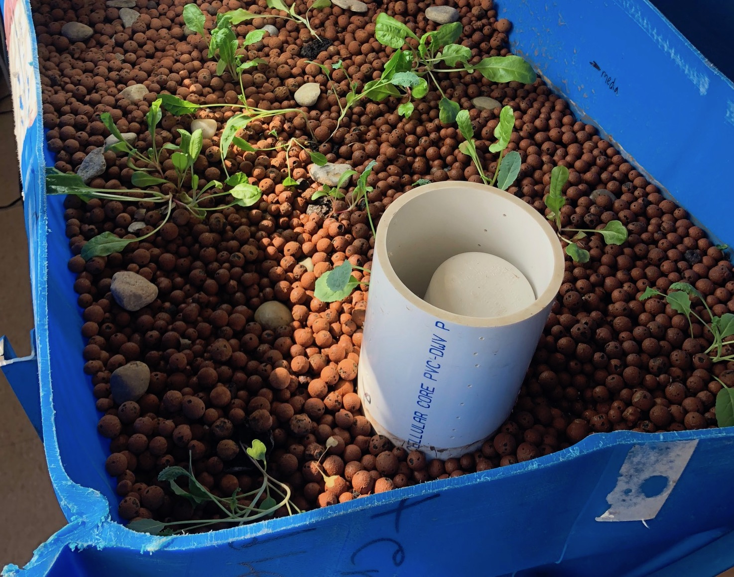 Brown pebbles in a modified blue plastic tank with small plants growing it it, plus pipes and tubes.
