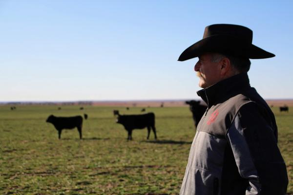 Close up of man in cowboy hat, in profile, looking out over a plain, with cattle in the backgound.h