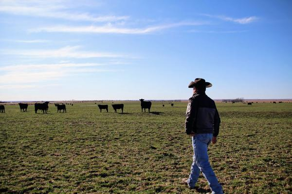 Man in cowboy hat looking out over plain with cows in the background.