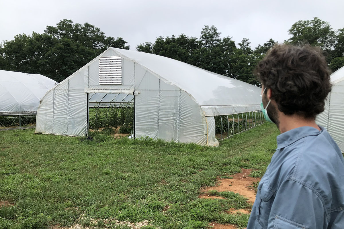 The back of Erin Carmen-Sweeny's head in forground, view of several agricultural high tunnels