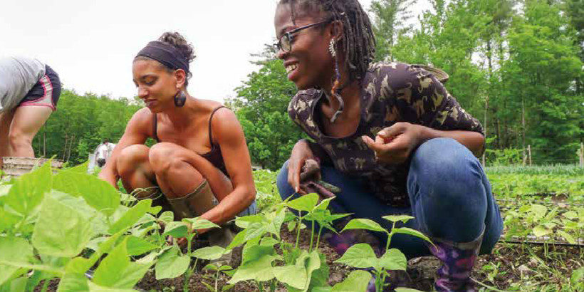 Close-up of two black women squatting and working with green bean plants in a field.
