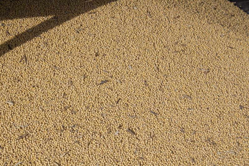 images/eartheats-images/soybeans.jpg
