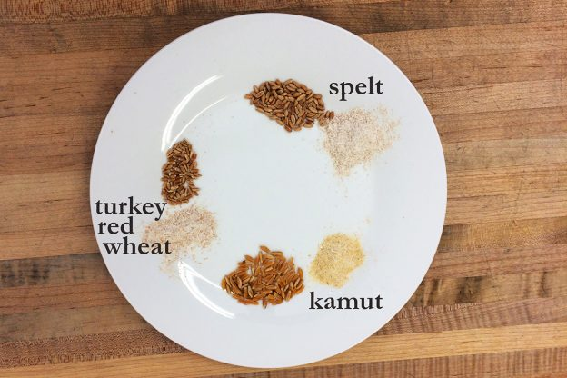 A white plate with three different grains, whole and ground, labeled: kamut, spelt, turkey red wheat.