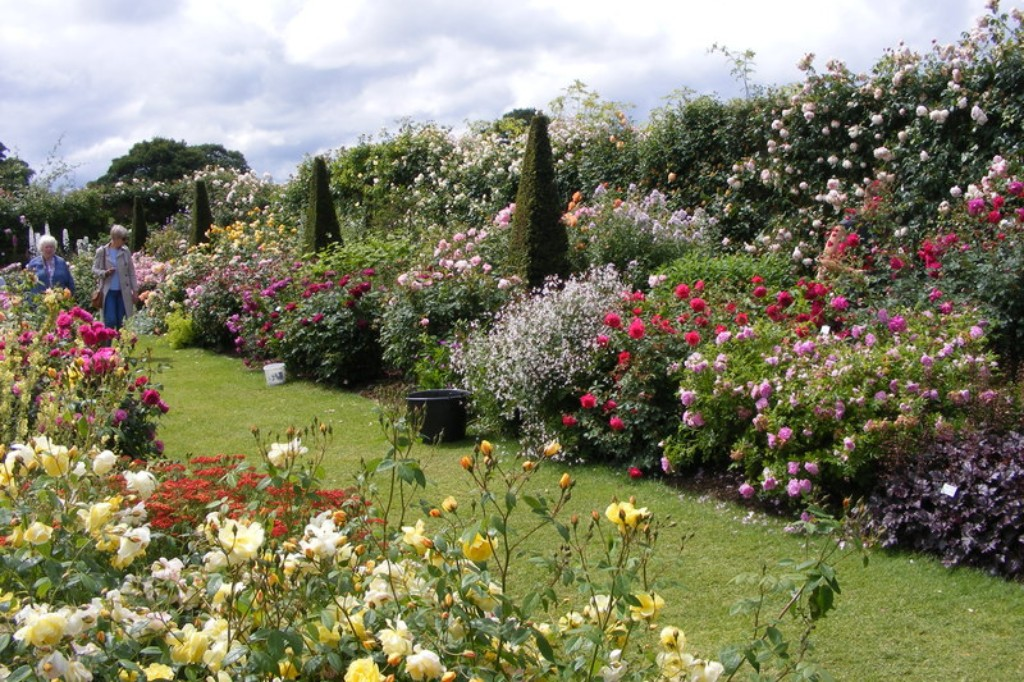David Austin Roses, The view in a commercial rose-growing nursery near Albrighton, England.