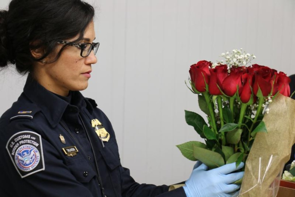 CPB inspection of imported roses