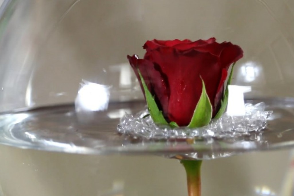 Rose floating in glass bowl.