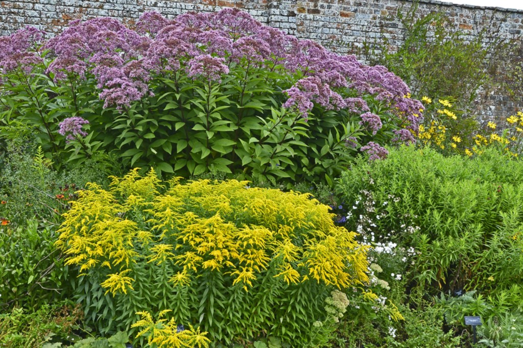 Tall native plants: Joe-Pye Weed, Goldenrod, etc.
