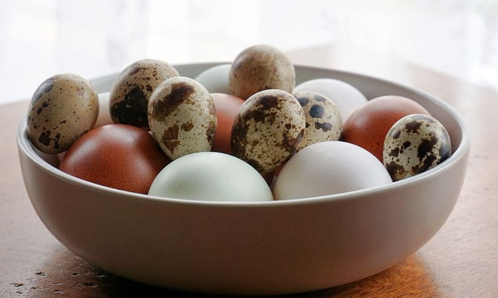 Chicken and quail eggs in a bowl.