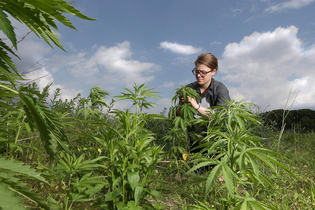 Marguerite Bolt is Purdue Extension's new hemp specialist.