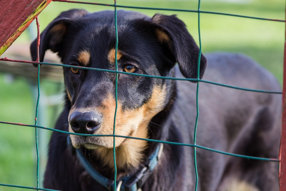 A stock image of a dog behind a fence.