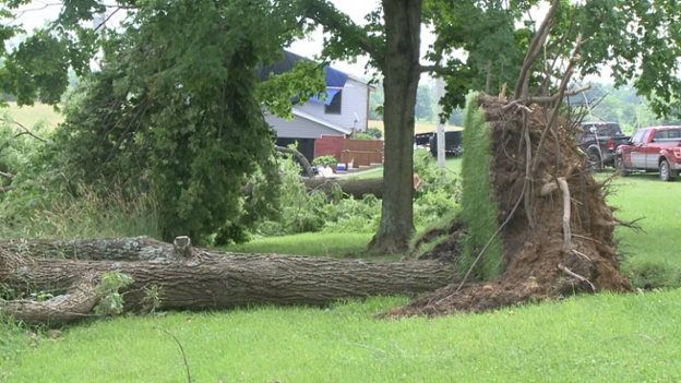 A tree lays in the yard of Greene County resident Lisa Childress