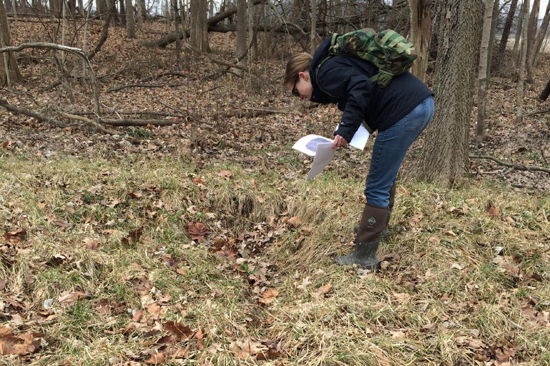 An Indiana Department of Environmental Management employee inspects an area in Hamilton County where an agricultural tile has been damaged, causing what they call an isolated wetland to form over time, 2017.