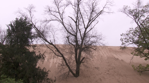 A view of a dune at Indiana Dunes National Park, near Michigan City, IN.