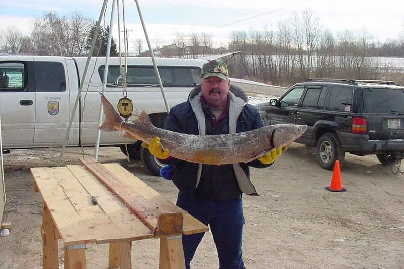 A man holds a sturgeon fish.