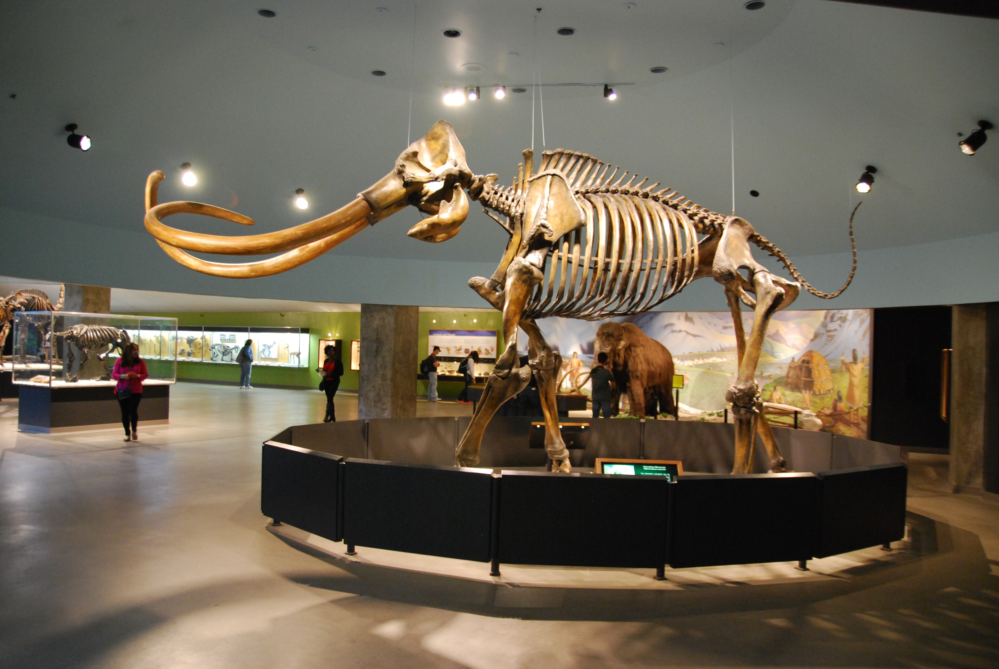 Mastodon Bones Found In Seymour Now At State Museum
