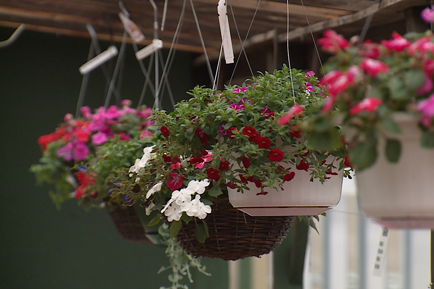 Hanging flower pots at mays greenhouse