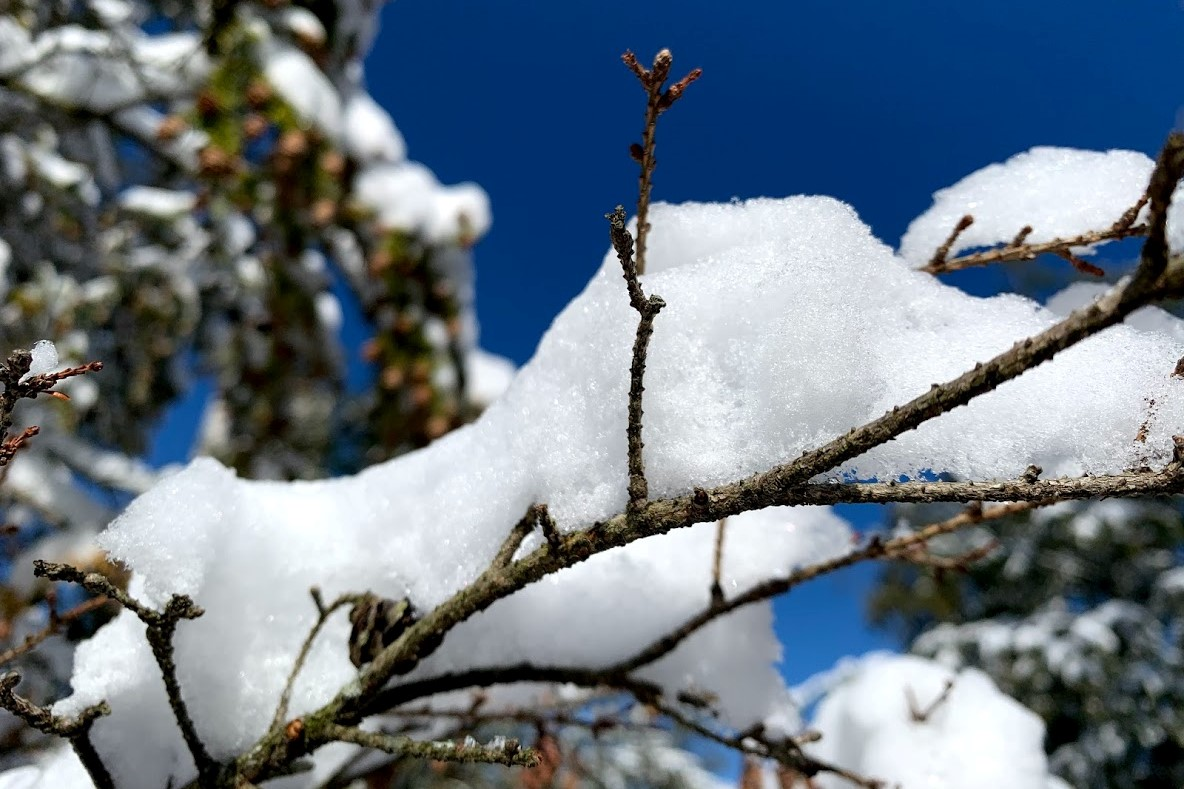 A generic photo of winter snow on a tree branch.