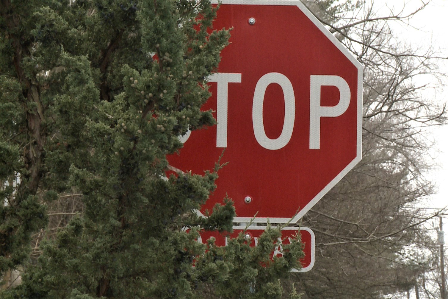 A stop sign in Bloomington partially obscured by  tree branches.