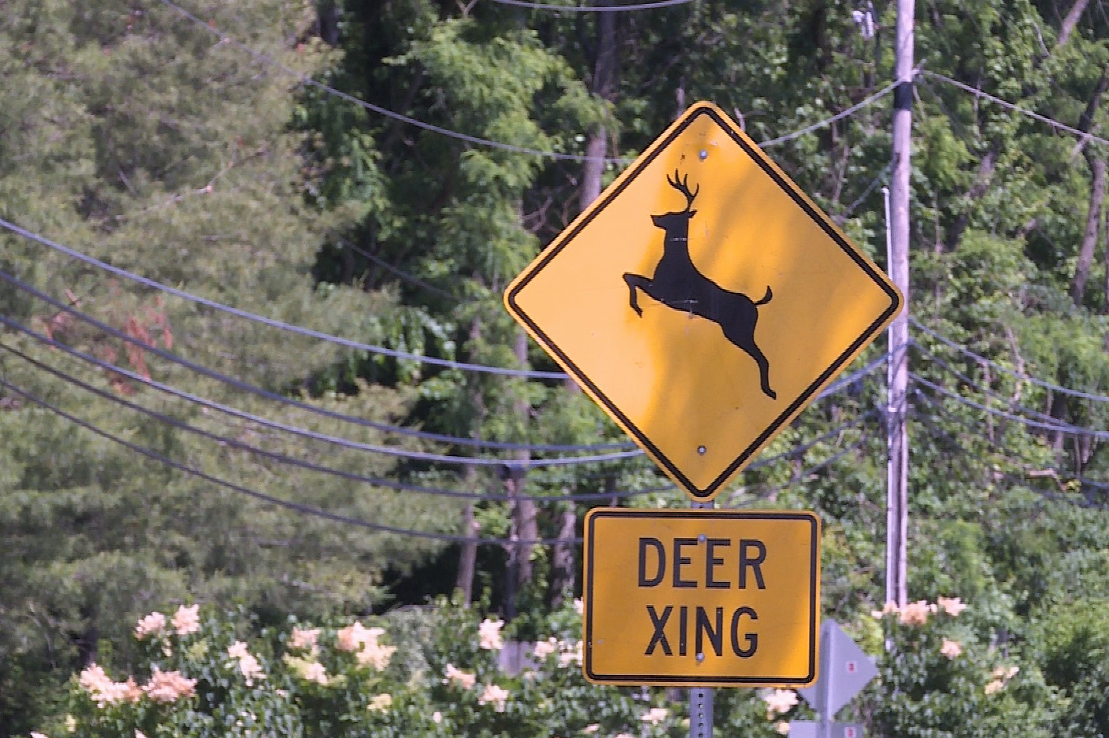 Deer-Crossing-Sign.jpg