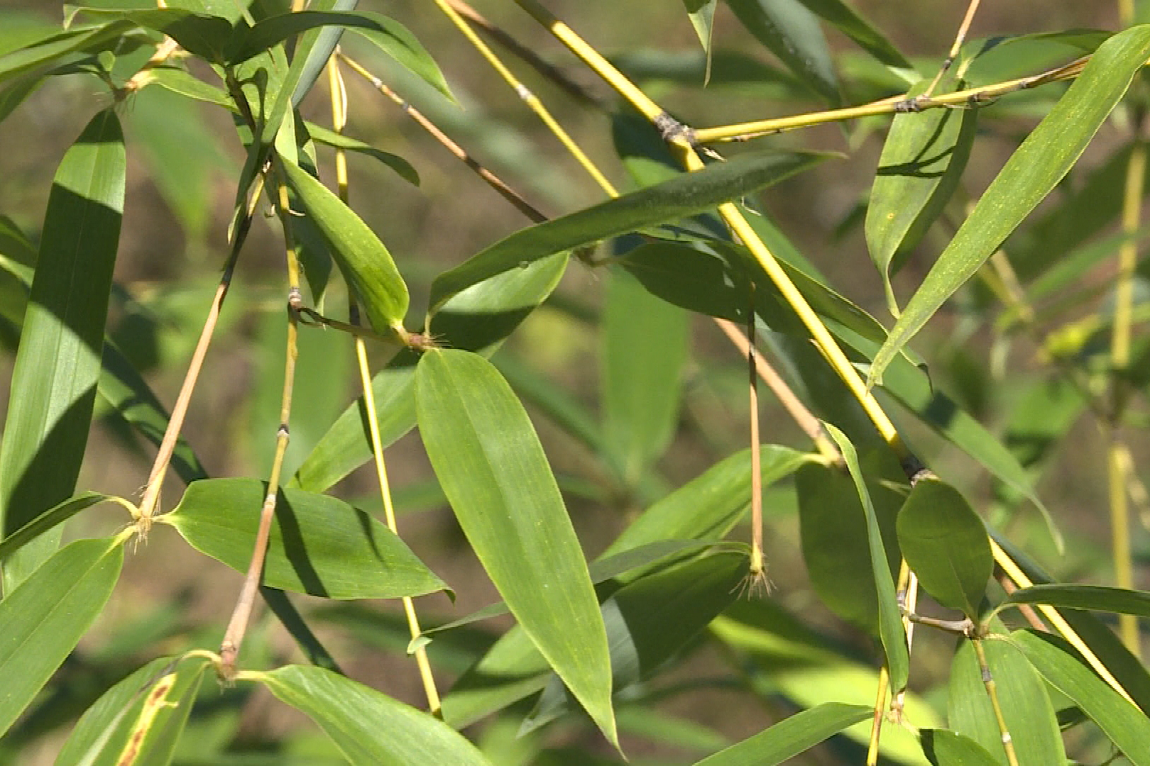 bamboo-.jpg