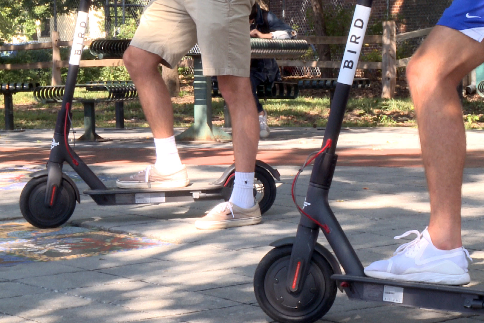 bird-scooter-pic.jpg