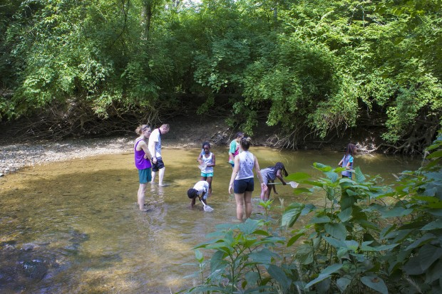Young campers search the creek at Jameson Camp for shells. (Peter Balonon-Rosen/Indiana Public Broadcasting)