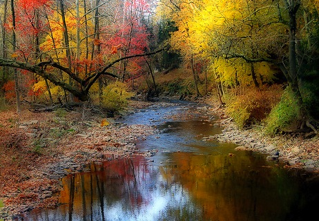 Colorful trees by a stream