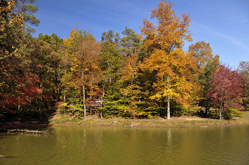 Fall trees in Brown County by a lake