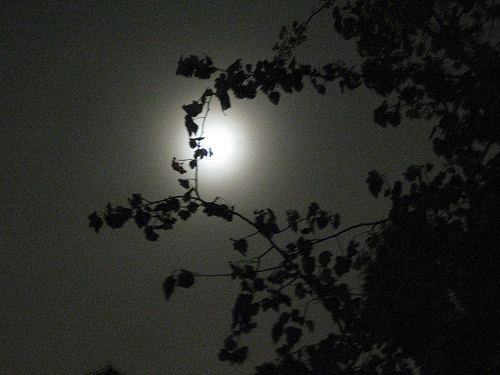 Foggy moonlight with tree branches