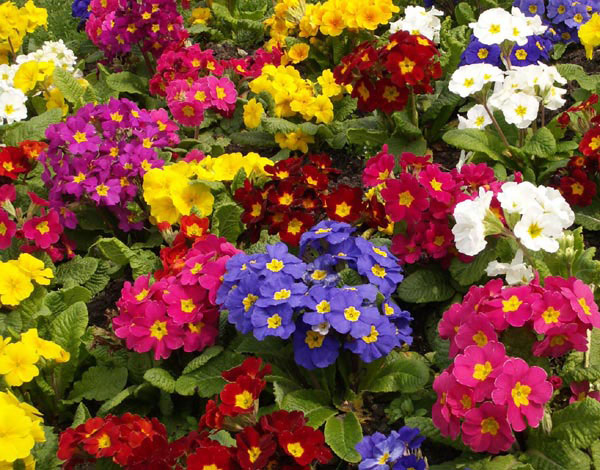 A colorful garden.