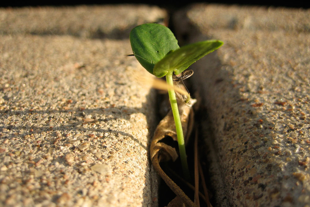 a crack in the sidewalk with a small plant growing in it