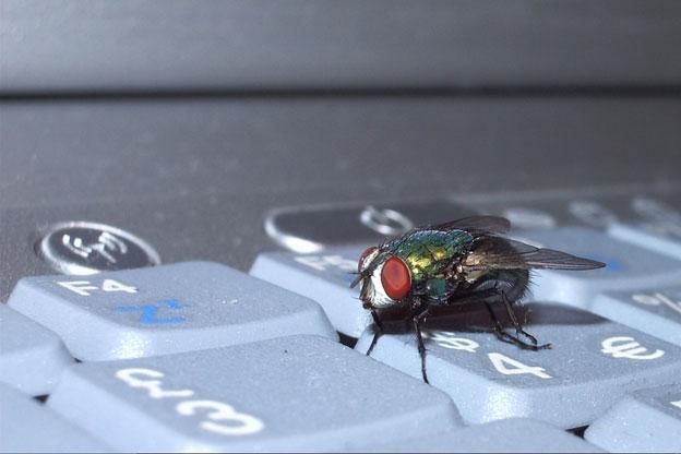 fly on keypad