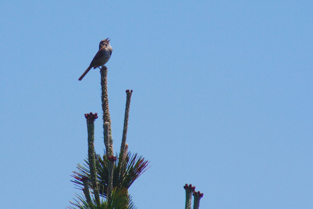 bird singing on some branches with a blue sky background