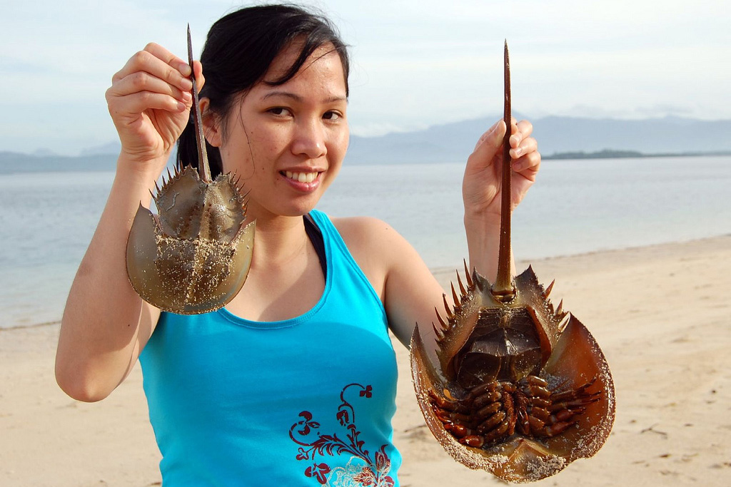 woman holding two horseshoe crabs while standing at the beach