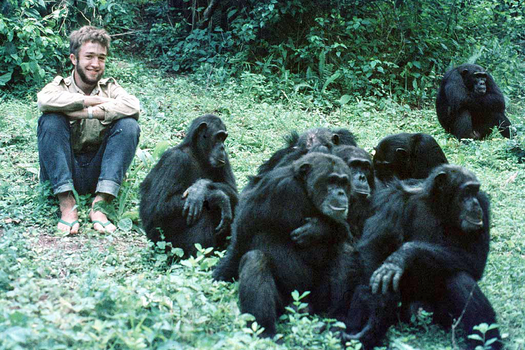 a man sits by a group of chimps