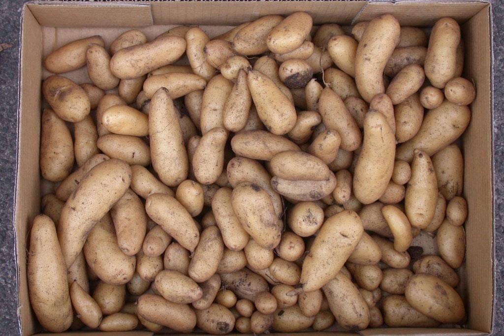 potatoes in a cardboard box