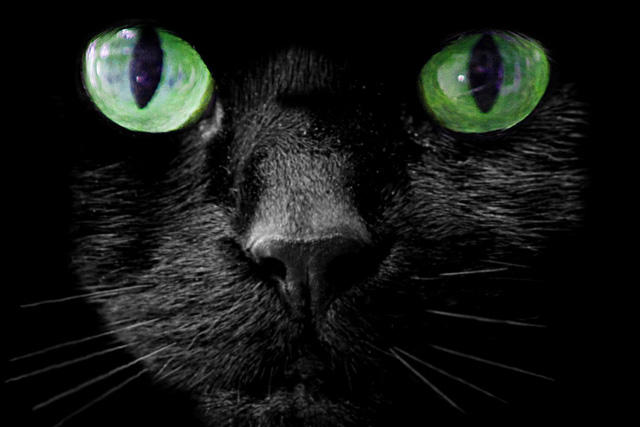 black cat close up with green eyes