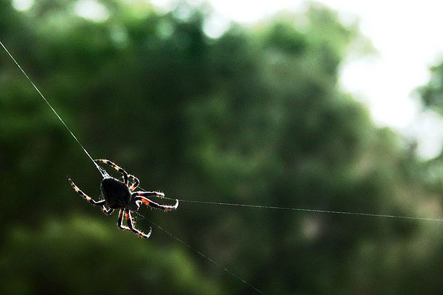 a spider in the trees weaving a web
