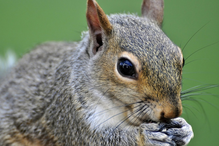 Close up photo of a quirrel