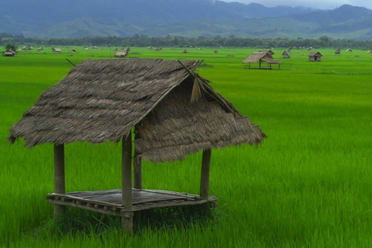 A rice paddy in norther Laos