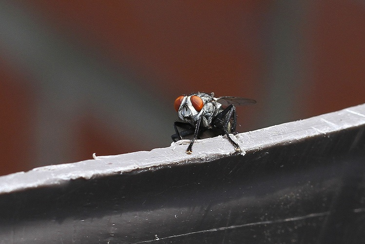 A fly sits on the edge of something