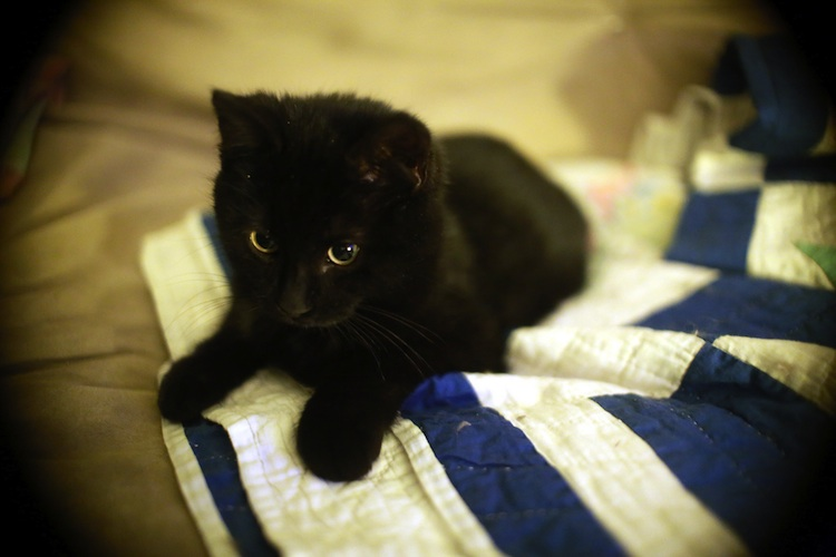 Black kitten sitting on a blue and white towel