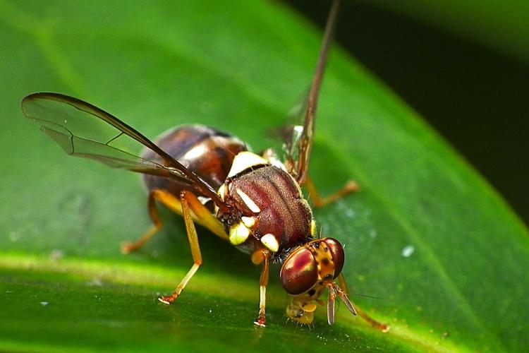 Fruit flies learn behavior from other fruit flies.